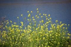 川辺の春時間