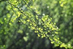 若葉の季節 3