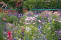 花の季節4