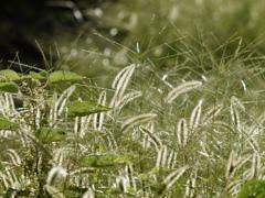 秋の雑草の主張