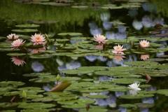 雨上がりの池にて