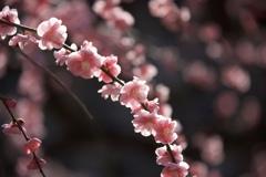 午後 花の時間
