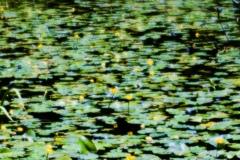 夏の沼のリズム 2
