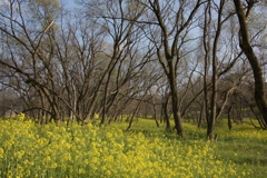 春の連鎖2