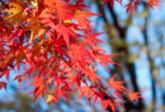 薄れゆく秋
