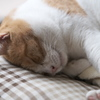 猫と日曜日