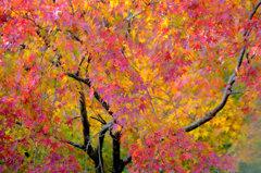 秋の彩り2013
