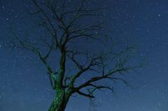 Tree of A scene