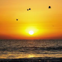 Flight in the sunrise