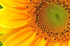 Sunny color