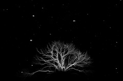 Snowing Tree