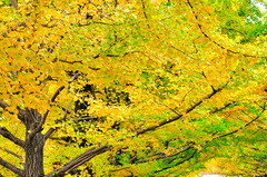 Gradation of autumn