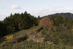 柿の木のある道・・・①