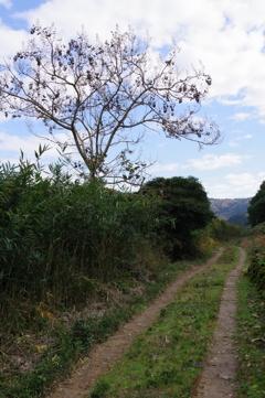 茶畑の道・・・②