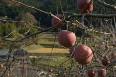 柿の木のある道・・・④