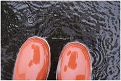 雨雨フレフレ