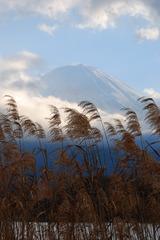 富士山とススキ
