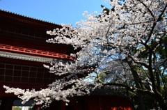 三解脱門と桜
