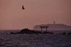 菜島の鳥居と江ノ島