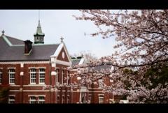 工芸館と桜