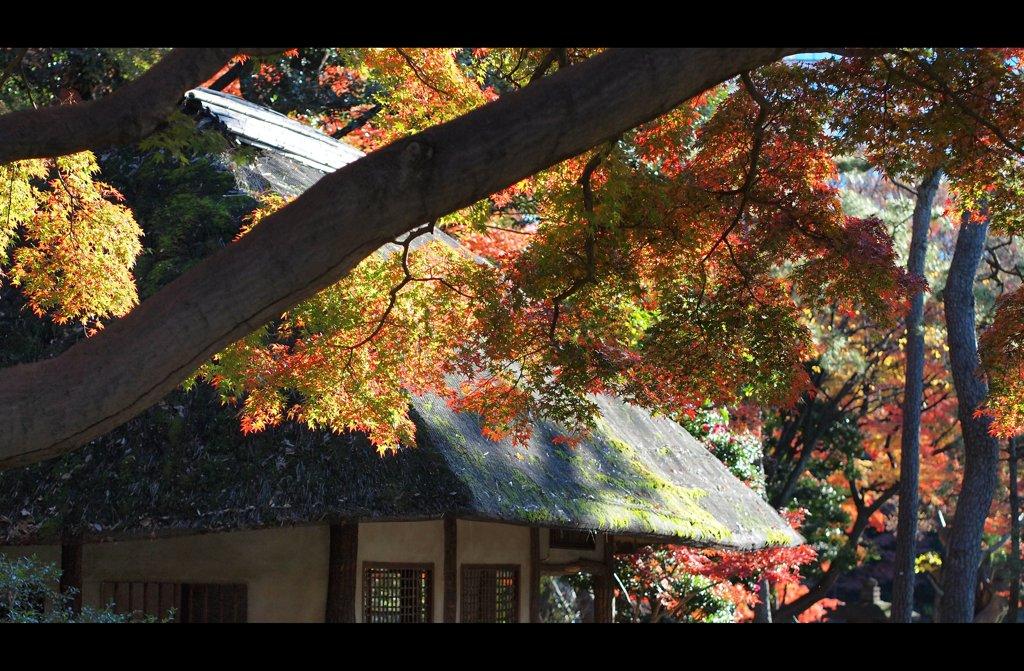 茅葺と紅葉