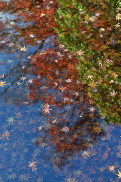 紅葉する水面