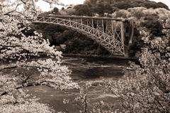 満開の西海橋