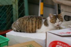 八百屋の猫の楽しみ