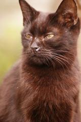 猫ポートレート No.18