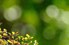 癒しのグリーン