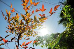 焼け付いた葉