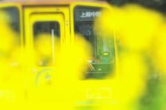 yerrow train