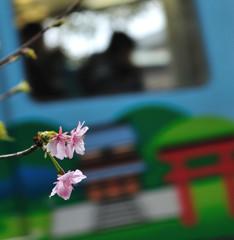 鎌倉に桜咲く