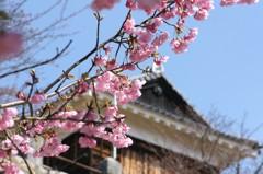 春、到来。