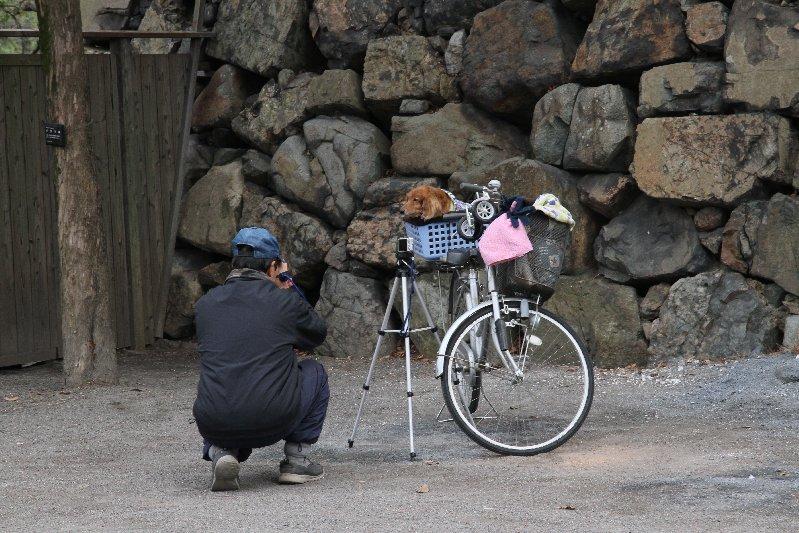 愛犬を撮る!
