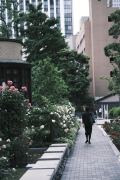 XF56㎜の薔薇 その1