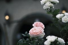 X-Pro3の薔薇 その1