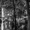 令和の桜雨