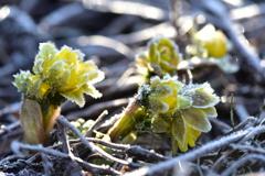 春を待ち焦がれて-2