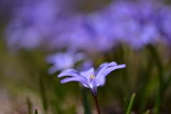 ふわり、春の花