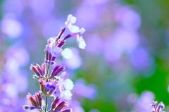 港の見える丘公園の花