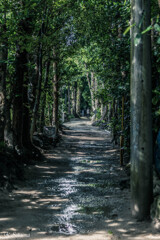 雨上がりの並木道