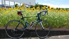 愛車と向日葵