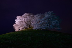 桜の樹の下には屍体が埋まつてゐる!