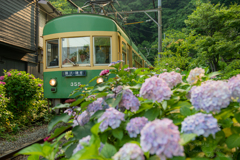 江ノ電の初夏