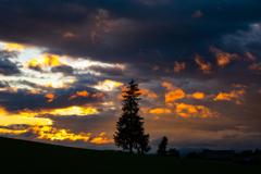 わずかな夕焼けのクリスマスツリーの木。