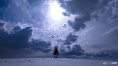 薄曇りの日と小さなツリー
