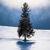 クリスマスツリーの木、冷たく静かに。