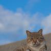 沖縄のノラ猫たち、1