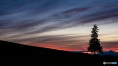 ツリーのある丘の夕焼け